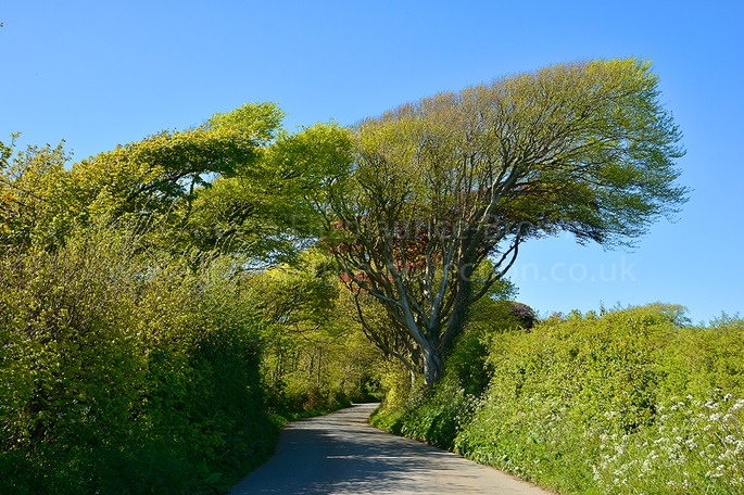 Colourful country lane, Wales, UK