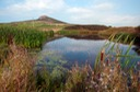 SCEN AND POND NEAR  RHODIAD, ST. DAVIDS WALES