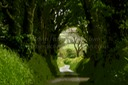 TREES AND COUNTRY LANE ART