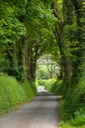 TREE LINED LANE WALES